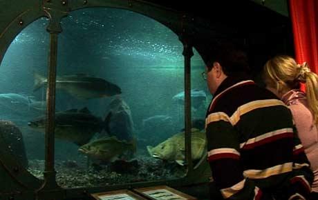 Akvariet skal speila ulike havsmiljø, derfor har det mange ulike sortar fisk (Foto: NRK/Ingelin Røssland)