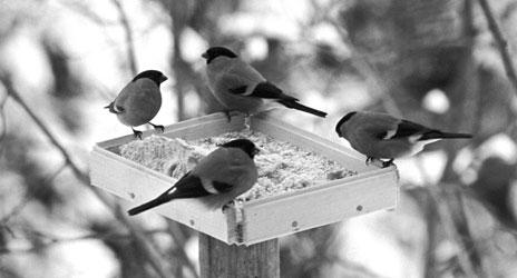 Fuglebrettet kan være en bakteriebombe. Foto: Scanpix