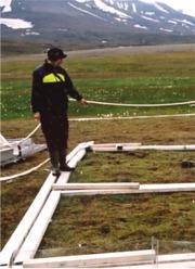Forskerne har lagt ut klopper slik at deres tråkking ikke skal ødelegge gresset