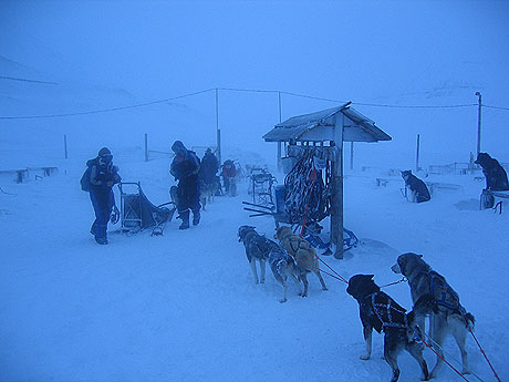 Hundene er klare, og ivrige etter å legge ivei. Foto Andreas Toft.