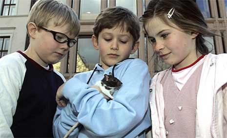 """Skuespillerne Thomas Saraby Vatle, med rotta """"Halvorsen"""", flankert av Melissa (Celine Louise Dyran Smith) og Dan (Louis Engebregtsen Bye)."""