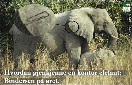 (Innsendt av Henrik Langås)