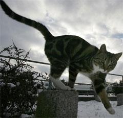 Hvor farlig er det at smitten nå er påvist hos katter? (Foto: Reuters/Scanpix)