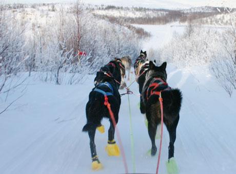 Løpet går gjennom skog og over vidder. Det er en fin opplevelse å følge løpet i terrenget. Foto: NRK/Trine Hamran.
