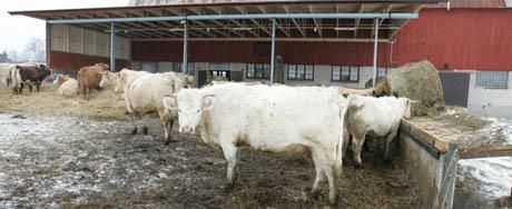 Den syke kua kom fra denne gården i Vesterås. (Foto: Fredrik Sandberg, Scanpix)