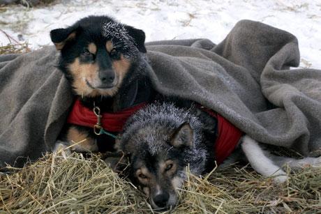 TURKAMERATER: Godt å varme seg på kollegaen mens spannet hviler i Levajok.