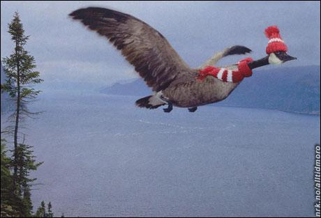 Noen fugler er sitt ansvar bevisst. (Kilde: ukjent. Tipset av Kenth A. Engh)