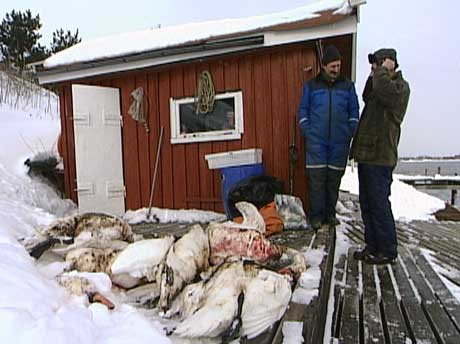 (Foto: Camilla Næss/NRK)