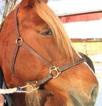 """Mennesket har i fra uminnelige tider hatt et nært forhold til hesten. Forstår du hesten kan du kanskje også forstå mennesker bedre! Balsam ser på ulike typer """"gråsoneterapi"""". (Foto: NRK)"""