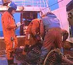 Fiskekontrollører