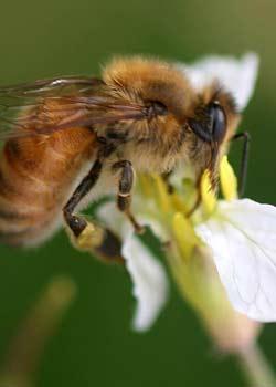 Etter flere kronår på rad flyter landet over av honning. Foto: Scanpix