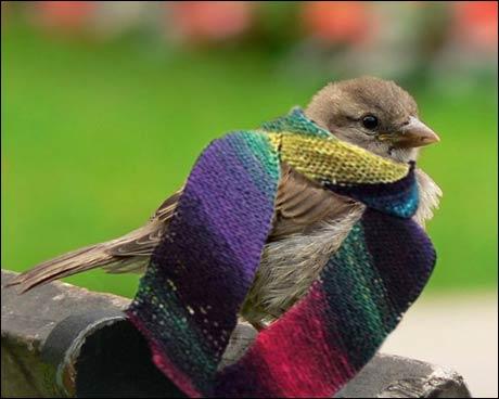 Norsk Ornitologisk Forening gjør nå forsøk med tvangspåkledning av spurver.