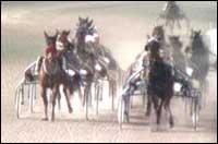 12 hester har fått startforbud etter en dopingrassia mot to staller i Bergen.