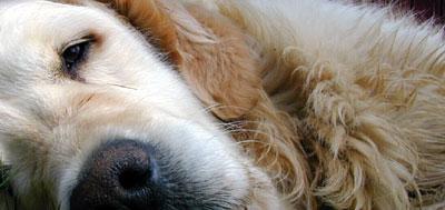 Omlag halvparten av alle hunder i Norge er feilernærte. Illustrasjonsfoto: Tore Sannum / SCANPIX