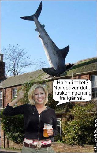 NRK-kjendis involvert i bisarr hai-ulykke. (Innsendt av Henrik Hope)