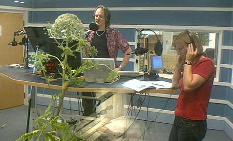 Rådgiver Heidi Hansen i Direktoratet for Naturforvaltning hadde tatt med seg et prakteksemplar av en tromsøpalme da hun skulle intervjues av programleder Arild Opheim. (Foto: Øyvind Wik, NRK)