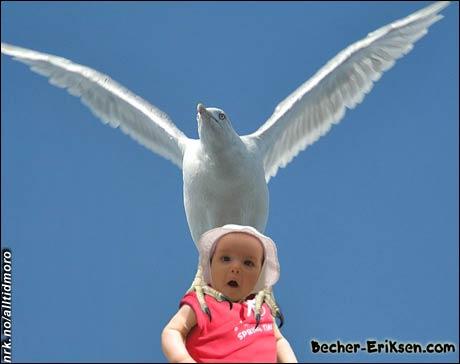 Et bilde av vår datter, som har hatt en opplevelsesrik ferie. Ho har lært seg å reise seg opp, gå med støtte, og fly med litt hjelp... (Innsendt av Jonny Eriksen, nissemann.com)