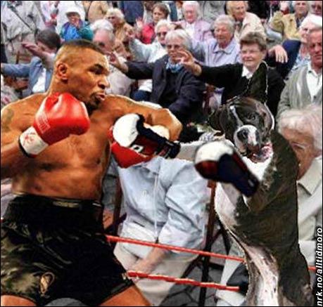 Mike Tyson møter en ordentlig boxer i sitt comeback i Las Vegas. (Innsendt av Tom Evensen)