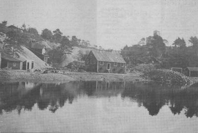Svanø Kisgruber
