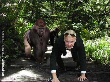 """Etter å ha fremført Peer Gynt i Egypt går turen sørover til Bwindi nasjonalpark i Uganda, der gorillaen """"Lucy"""" har rollen som Mor Åse. (Innsendt av Hallgeir Greger)"""