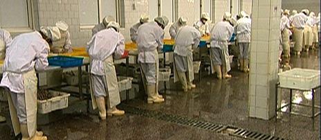 Kineserne tar imot 100 000 tonn frossen torsk fra utlandet hvert år. Mye av den er fraktet fra Norge, halve kloden rundt.
