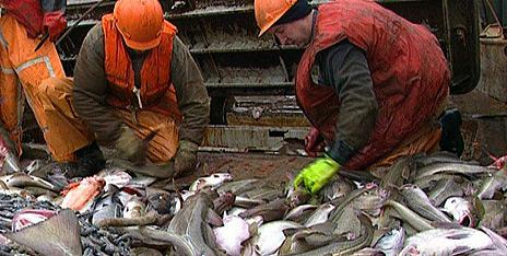 Stadig mer av fisken fra Barentshavet sendes til Shanghai før den returneres til Europa.