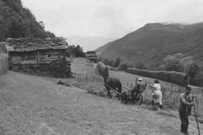 Slåttonn i teigen Vedhoggi under garden Berge i Luster på 1950-talet. Biletet er utlånt av Oddlaug Molland.