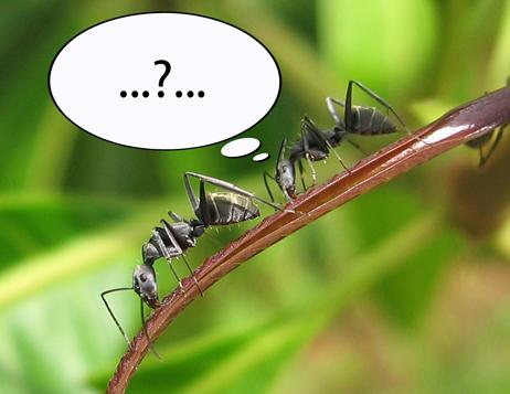 Hva tror du dette insektet tenker?