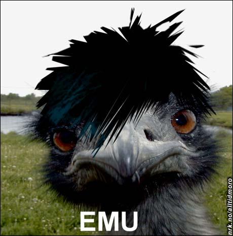 Emo-emu. (Innsendt av Team Jasc)
