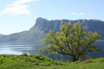 Fjellet Lihesten, ein markert topp på fjellplatået Lifjellet. Foto: Ottar Starheim