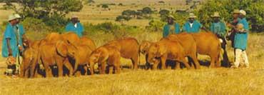 "På tur med ""barnehagen"", Copyright: Sheldrick Wildlife Trust"