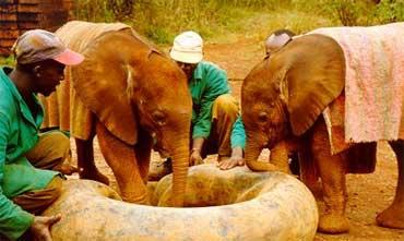 Hva er nå dette? En badering? her på savannen? Natumi og Maluti, foto: Lissa Ruben, Copyright: Sheldrick Wildlife Trust