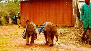 Alle barn elsker å kle seg ut. Maluti og Natumi er intet unntak. Foto: Lissa Ruben, Copyright: Sheldrick Wildlife Trust