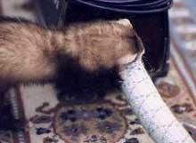 Ilder og støvsuger: En farlige kombinasjon