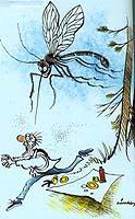 Fuktig vårvær gir mye myggklekking.